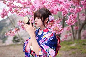 Hintergrundbilder Asiatische Blühende Bäume Kimono Japanische Kirschblüte Mädchens