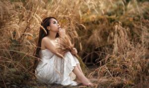 Bilder Asiaten Gras Sitzt Kleid Hand Braune Haare junge frau