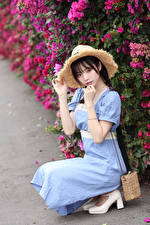 Bilder Asiaten Posiert Sitzt Kleid Der Hut Starren junge Frauen