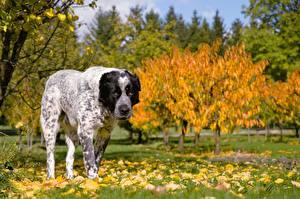 Bilder Herbst Gras Blattwerk Alabai ein Tier
