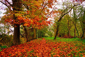Images Autumn Oak Trees Foliage Nature