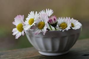Fotos Gänseblümchen Bokeh Schüssel Blüte