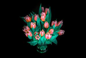 Picture Bouquet Tulips Black background Flowers