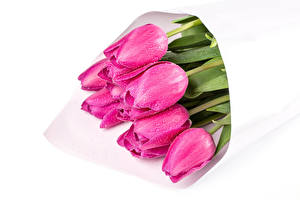 Pictures Bouquets Tulips White background Pink color Drops