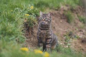 Images Cats Grass Blurred background Sitting Glance Animals