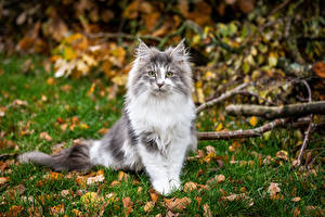 Picture Cats Sitting Glance Blurred background Animals