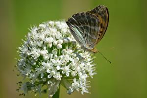 Desktop hintergrundbilder Hautnah Schmetterlinge Insekten Bokeh Tiere