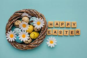 Pictures Easter Matricaria Colored background Eggs Word - Lettering English