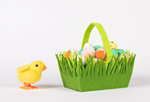 Pictures Easter Chicks White background Wicker basket Eggs Food Animals