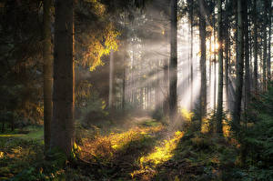Images Germany Forests Bavaria Trees Rays of light Nature