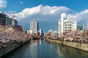 Pictures Japan Building Spring Flowering trees Bridges Rivers Yokohama, Ooka River