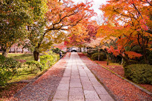 Images Japan Kyoto Park Autumn Allee Trees Bush Leaf Nature