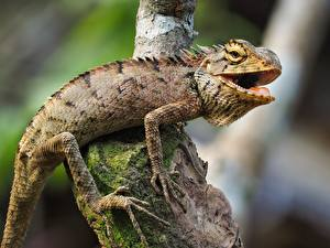 Photo Reptiles Blurred background Branches Paws Iguana Animals