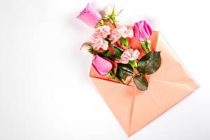 Bakgrunnsbilder Rosa Nelliker Hvit bakgrunn Konvolutt Gratulasjonskort Mal Blomster