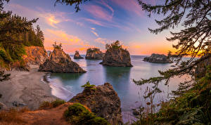 Image USA Coast Cliff Trees Oregon Nature