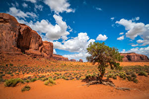 Pictures USA Rock Clouds Trees Monument Valley, Utah Nature