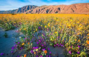 Bilder Vereinigte Staaten Berg Park Kalifornien Anza-Borrego Desert State Park