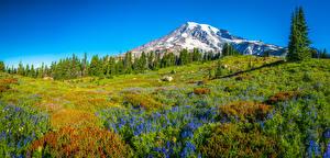 Hintergrundbilder USA Gebirge Parks Panoramafotografie Landschaftsfotografie Bäume Washington Mount Rainier National Park Natur
