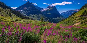 Bureaubladachtergronden Amerika Bergen Parken Landschap van Grasland Lupine Panorama Washington (staat) Glacier National Park Natuur