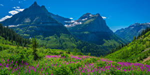 Wallpapers USA Mountains Parks Scenery Lupinus Washington Glacier National Park Nature