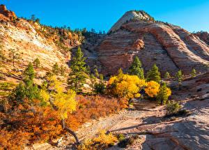 Hintergrundbilder Vereinigte Staaten Parks Herbst Gebirge Zion-Nationalpark Felsen Utah Natur