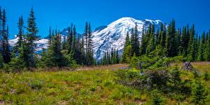Bureaubladachtergronden Verenigde staten Parken Berg Panoramische Landschap van Bomen Mount Rainier National Park Natuur