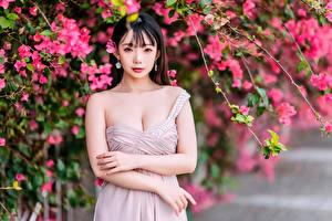 Hintergrundbilder Asiaten Ast Hand Blick junge Frauen