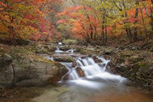 Pictures Autumn Stones Moss Creeks Foliage Nature