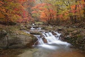 Pictures Autumn Stones Moss Creeks Foliage