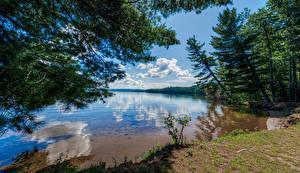 Desktop wallpapers Canada Lake Trees Clouds Reflection Bark Lake Nature