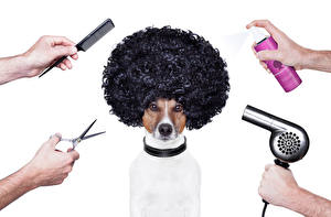 Photo Dogs Scissors Jack Russell terrier Hair Hands Animals