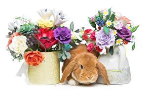 Fondos de escritorio Pascua Ramos Conejos
