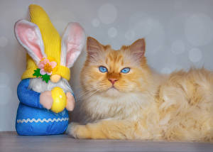 Hintergrundbilder Ostern Hauskatze Kaninchen Starren Eier