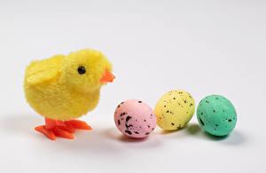 Fondos de escritorio Pascua Pollos Fondo gris Tres 3 Huevo Animalia