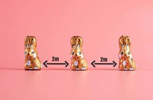 Wallpaper Easter Rabbits Coronavirus Chocolate Colored background Three 3 Flowers