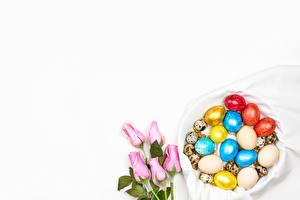 Fondos de escritorio Pascua Rosas El fondo blanco Tarjeta de felicitación de la plant Rosa color Huevos Multicolor Flores Alimentos