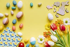Wallpapers Easter Spring Tulip Chrysanths Camomiles Egg Flowers