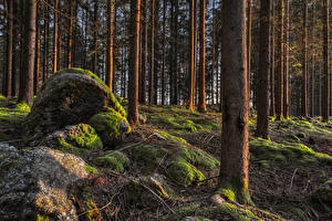 Photo Forest Stones Trees Moss Branches Trunk tree Nature