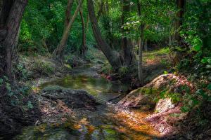 Fotos Wald Stein Bäume Bach Natur