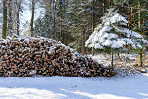 Wallpaper Forests Winter Spruce Wood log Snow