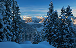 Picture Germany Mountains Winter Bavaria Spruce Snow above lake Eibsee