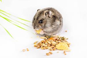 Image Hamsters Grain Animals