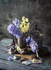 Fotos Hyazinthen Bretter Vase Bücher Blüte
