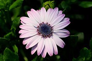 Fotos Kapkörbchen Nahaufnahme Unscharfer Hintergrund Blumen