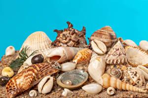 Picture Shells Snails Nature