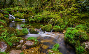 Wallpapers Spain Stones Brook Moss Galicia Nature