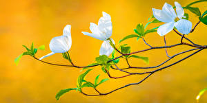 Fotos & Bilder Frühling Blühende Bäume Ast Natur