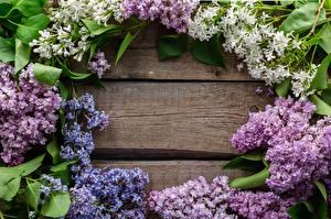 Image Spring Syringa Template greeting card flower