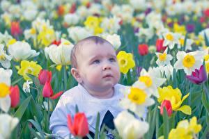 Fotos Tulpen Jungen Starren Bokeh Trübsal kind
