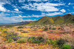 Fotos & Bilder USA Gebirge Park Frühling Kalifornien Wolke Joshua Tree National Park Natur